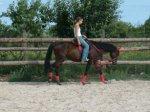 Jazdecký klub El Zorro, Nitra